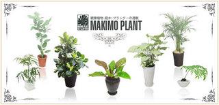 MAKIMO PLANT